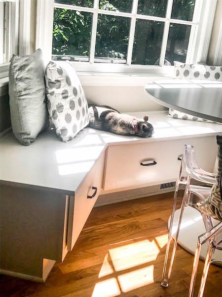 cat-in-sunlight