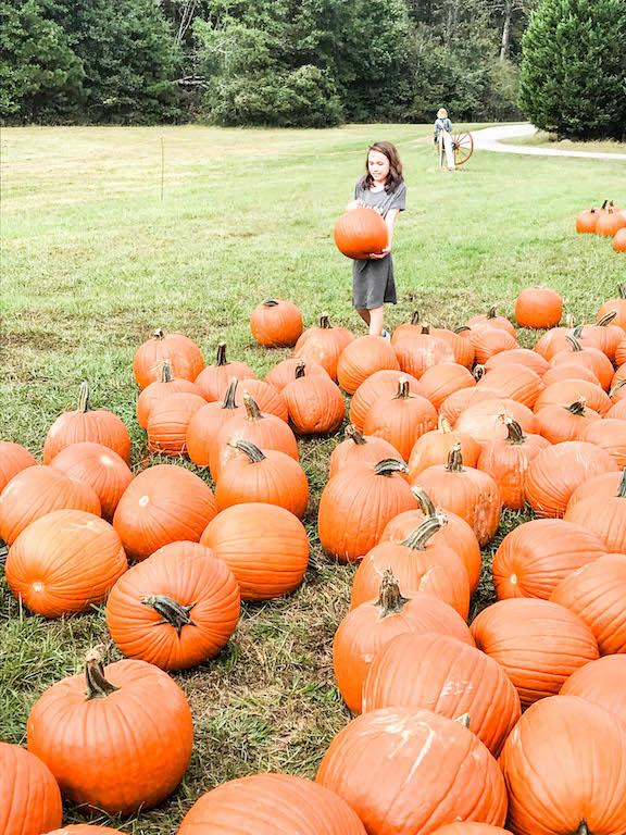 pumpkin-picking