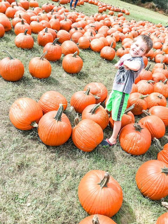 greyson-pumpkin-picking