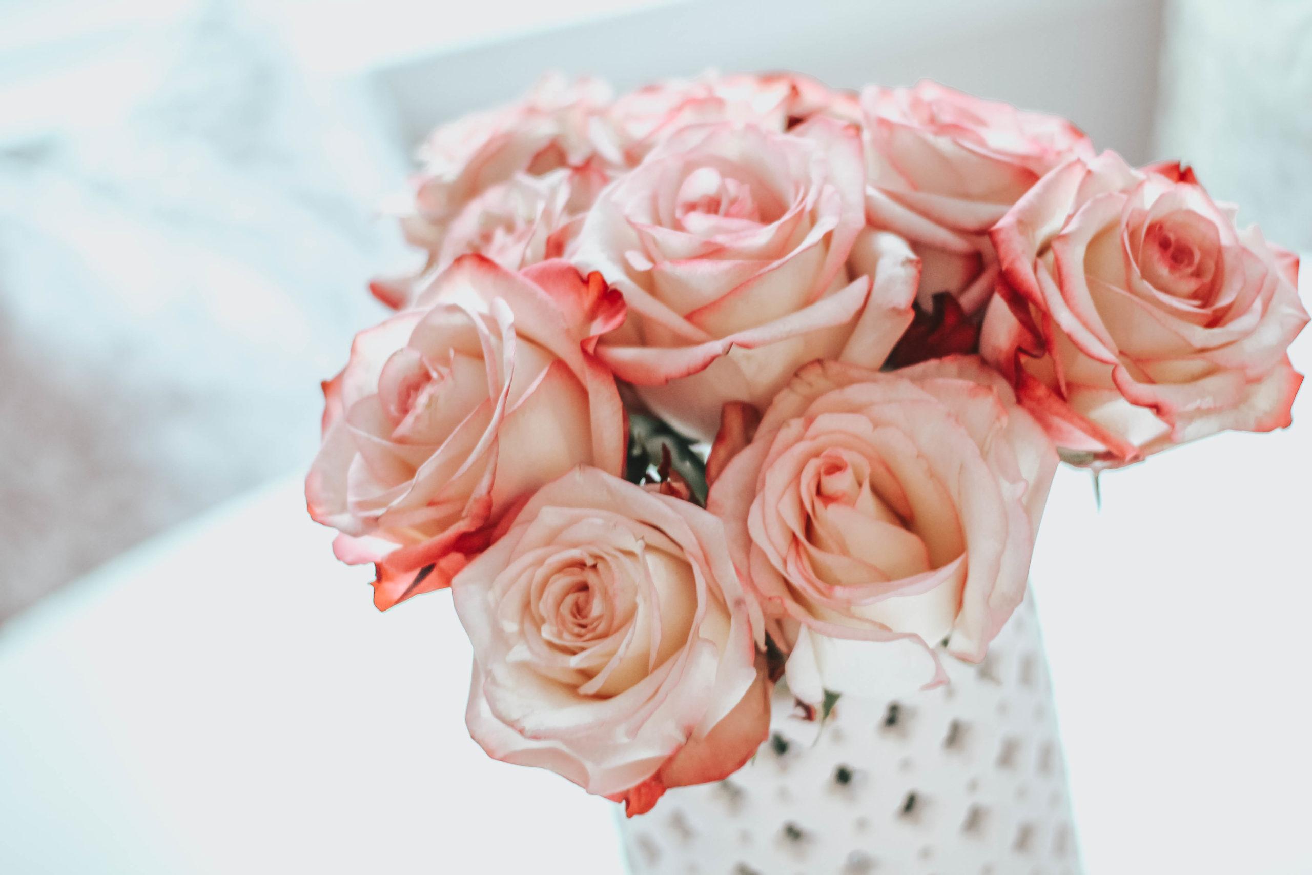 rose cutting tutorial